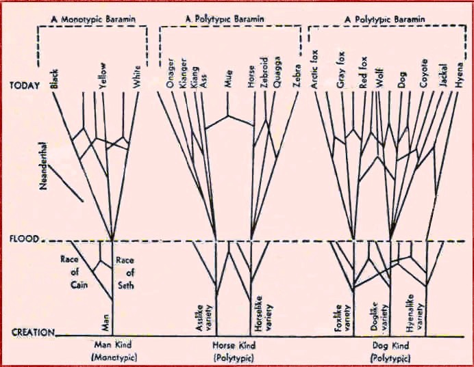 Genesis kinds1