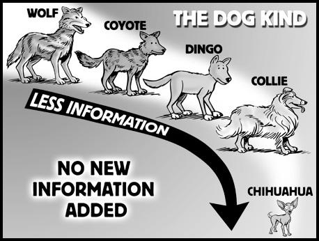 dog -kinds