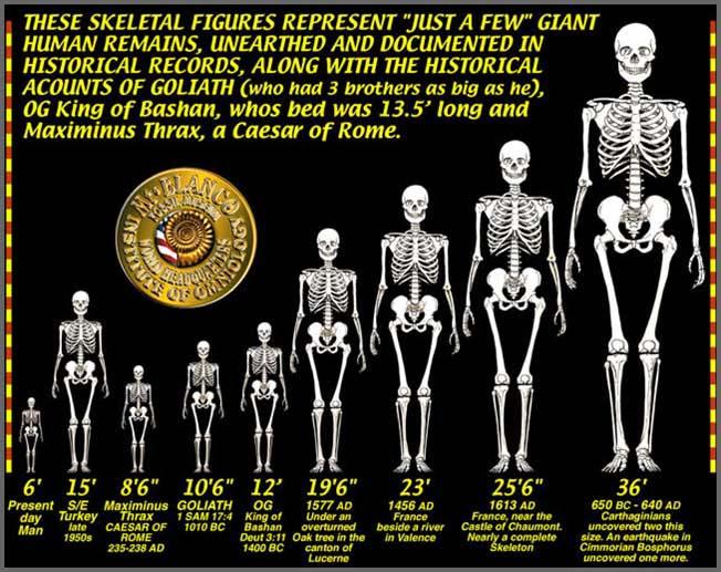 SkeletonChart1 copy