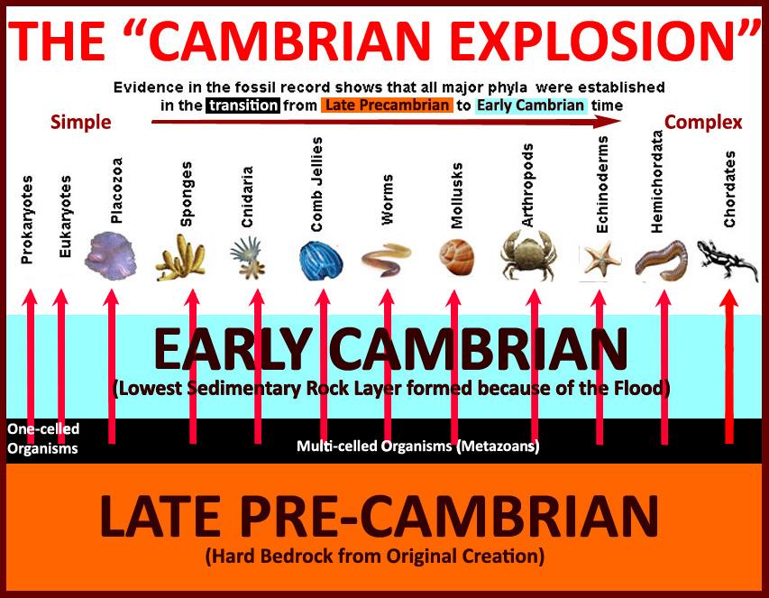 cambrian_explosion - 1 copy