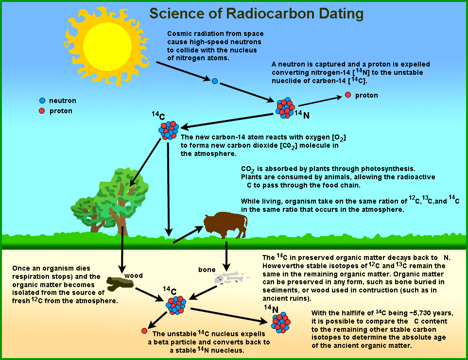 what is radiocarbon dating process